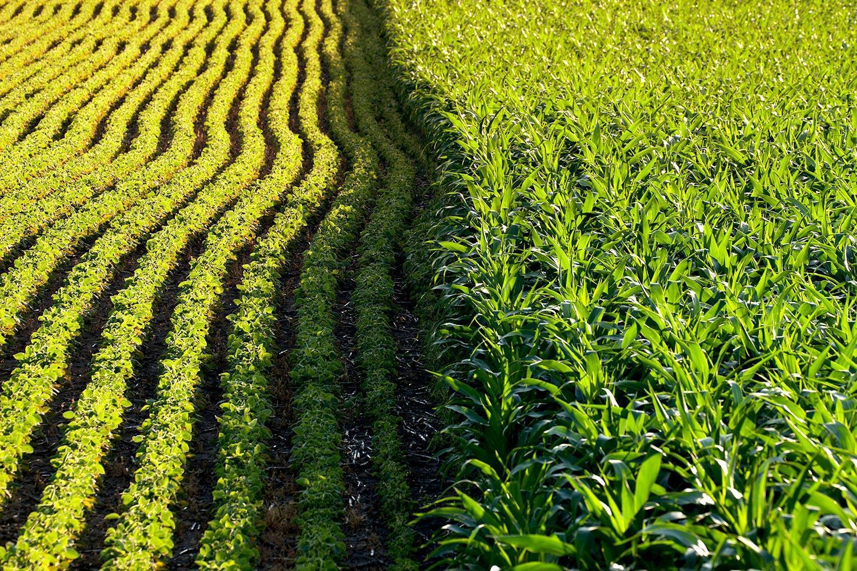 美国最新调查: 44%的人觉得转基因食品不好不坏