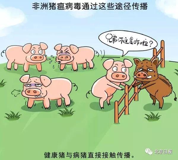 http://himg2.huanqiu.com/attachment2010/2018/1123/20181123114437674.jpg