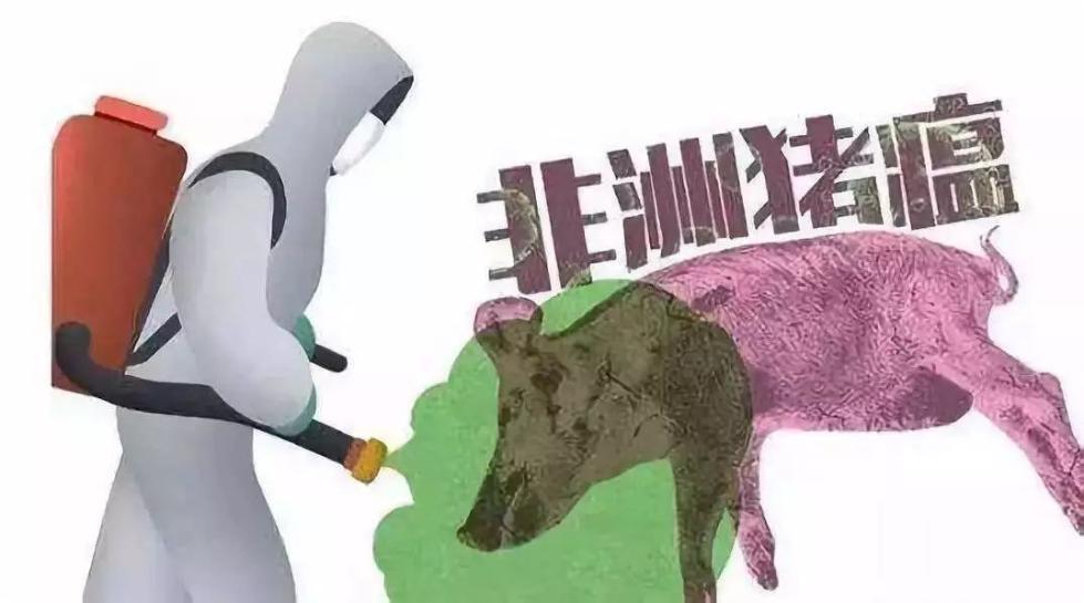 非洲猪瘟哪来的?肉还能吃吗?会传染人吗?答案在这里!