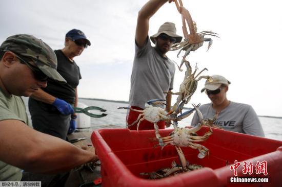 日本一只螃蟹拍出12万元天价 入选吉尼斯世界纪录