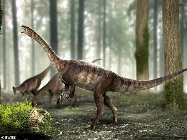 巴西发现2亿多年前恐龙化石 体型如小汽车大小