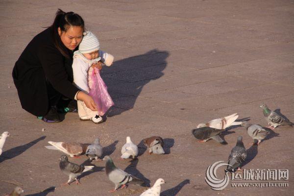 人鸽互动惬意冬日