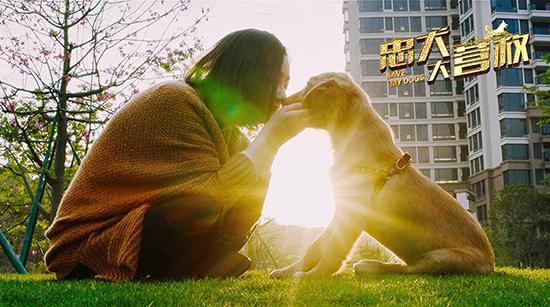 《忠犬大营救》感人催泪 导演呼吁关爱狗狗