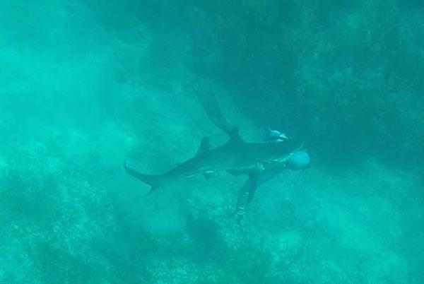 男子水下捕鱼遭鲨鱼袭击 称脑袋发出嘎吱声