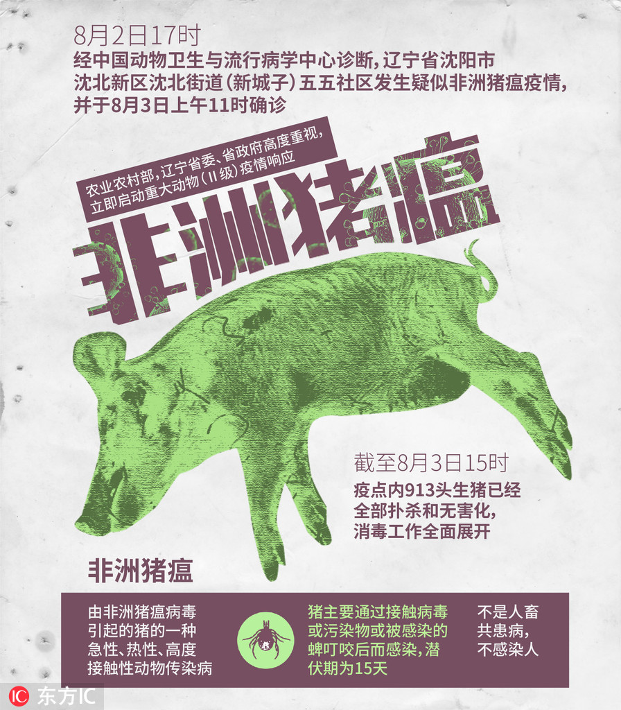非洲猪瘟不是人畜共抱病 不会熏染人
