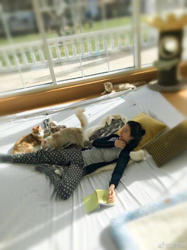 宠物博主上线!刘亦菲躺地阅读被猫咪围绕超幸福