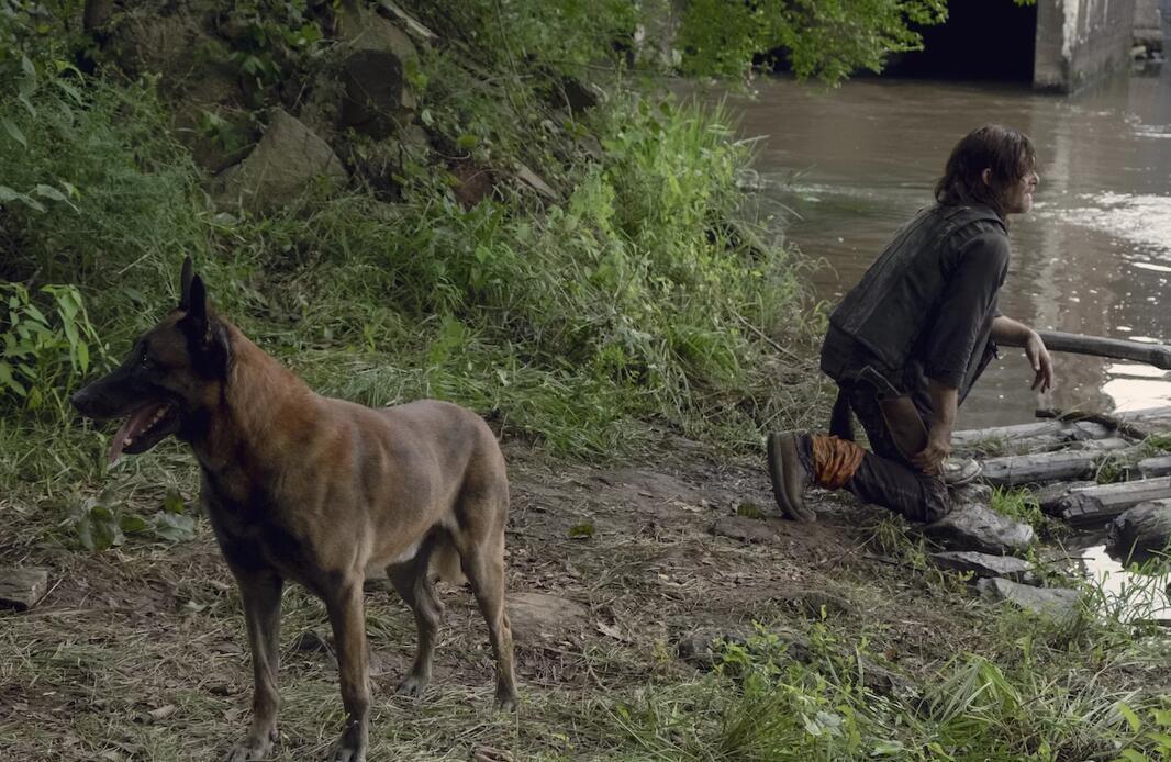 《行尸走肉》中动物不会变丧尸?这病毒只针对人