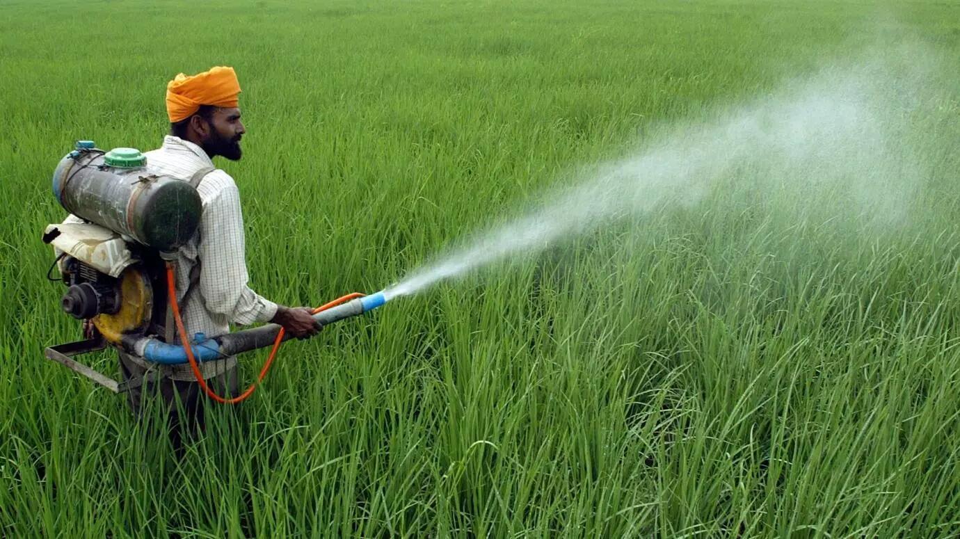 """印度科学家研发""""解毒凝胶""""帮助农民免受农药毒害"""
