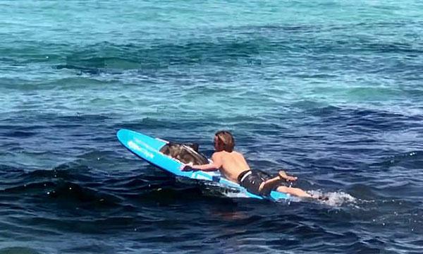 澳救生员用冲浪板帮助搁浅虎鲨重返大海获赞