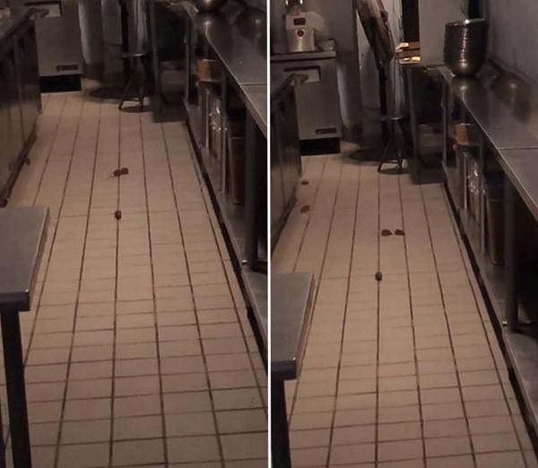 纽约一沙拉店被曝关张后店内有8只老鼠乱窜