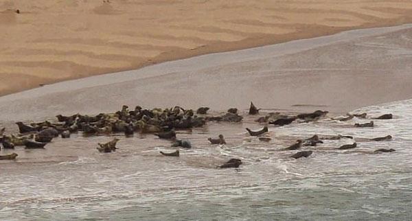 游客无视警告标志靠近海豹致其受惊冲向大海