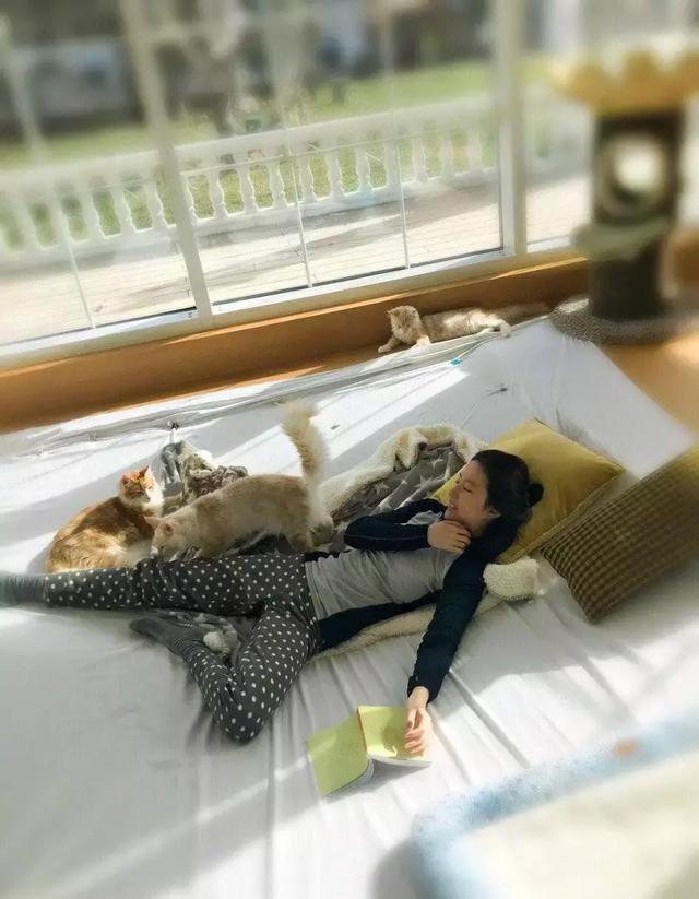 刘亦菲晒与猫咪互动照,她家的大露台和草坪却亮了