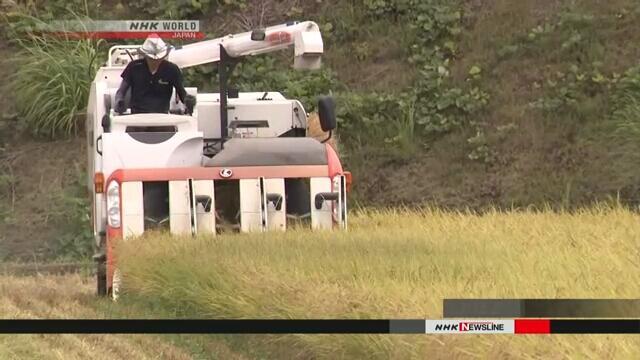 日媒:中国海关解禁日本新潟大米进口