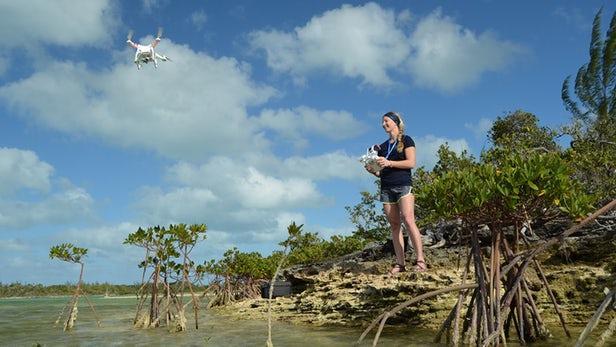 北卡罗来纳州立大学科学家用日常无人机追踪鲨鱼