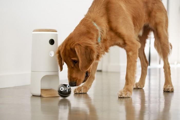 白领上班后如何照顾家中宠物?Pupple帮你解决