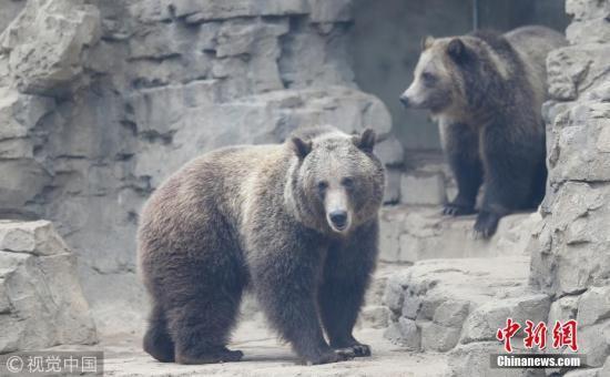 心痛!加国母女度假遇灰熊 遭袭击惨死