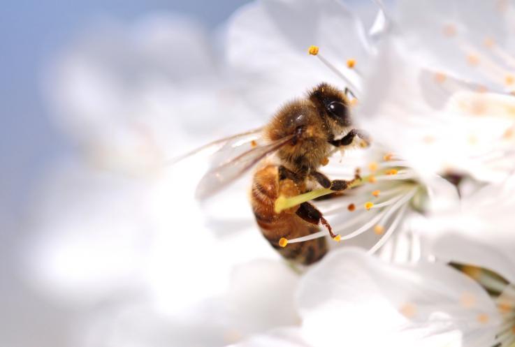 蜜蜂的世界你不懂:为啥能有两个爸爸但没有妈妈?