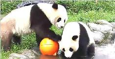 大熊猫打水仗,约吗?