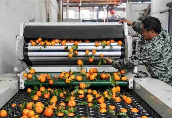 共享发展让山区小柑桔变成致富大产业