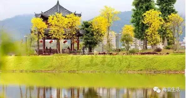 赞 ! 梅州力争明年成功创建国家森林城市 !