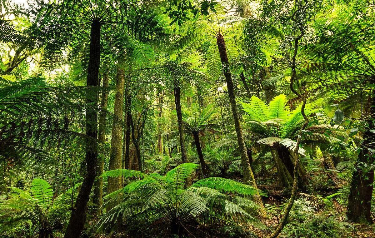 巴西森林砍伐严重:一年流失面积约100万个足球场