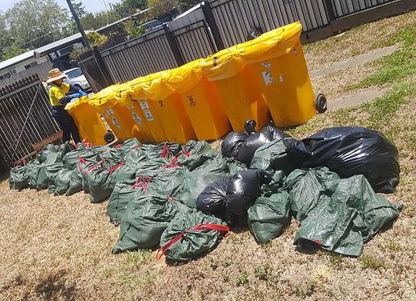 澳居民家外现大量蝙蝠尸体 被迫带孩子住旅馆