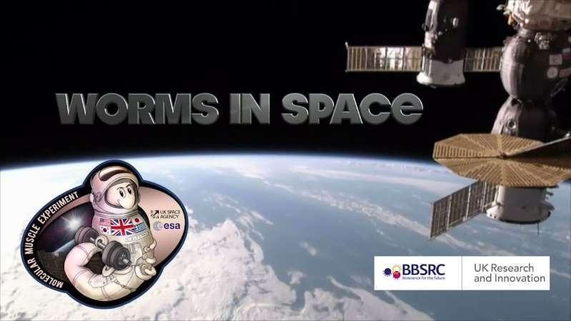 SpaceX火箭迎来神秘乘客 3.6万蠕虫将登上空间站