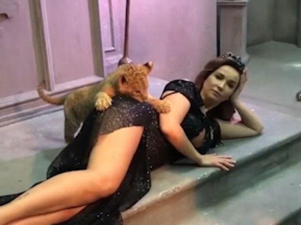 俄罗斯一狮崽与女主播拍照时坐卧不定咬其臀部