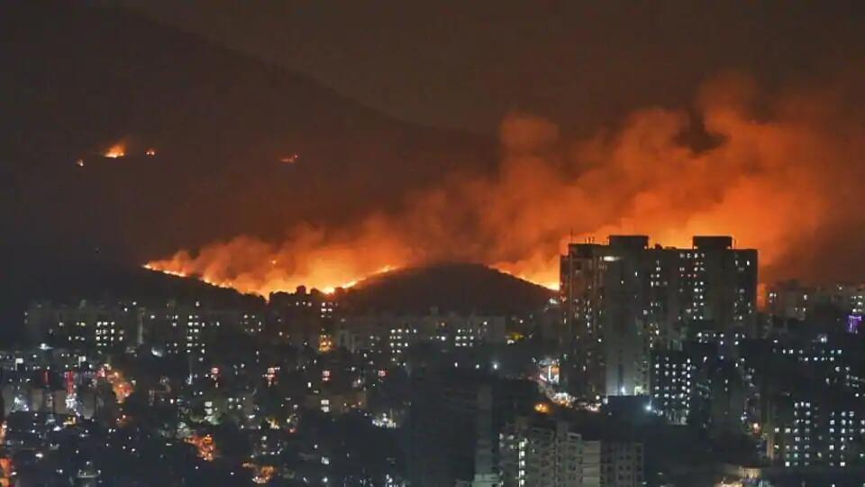 印度孟买森林突发大火 无人伤亡森林恐遭严重破坏