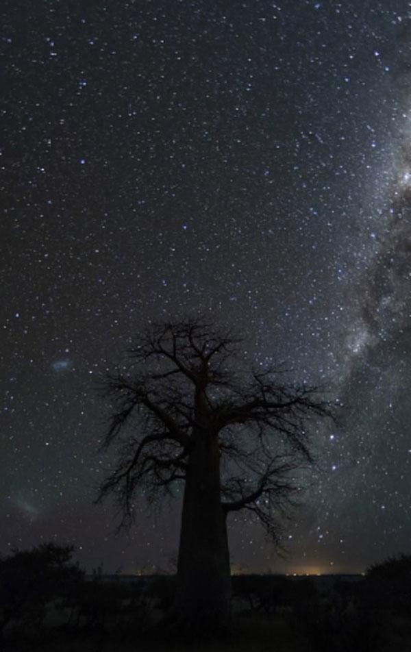 动人心魄!南非古树搭档璀璨星空美到令人窒息