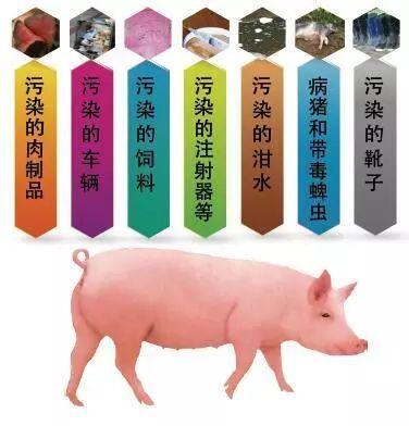 江西省九江市柴桑区排查出非洲猪瘟疫情