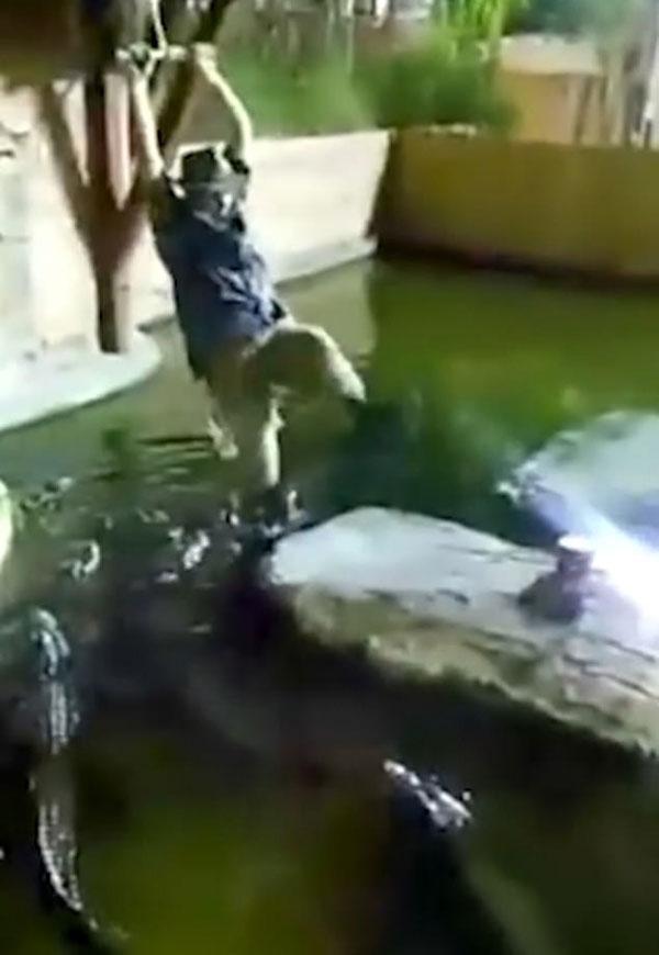 惊魂时刻!美男子荡绳时绳子断开掉入鳄鱼池