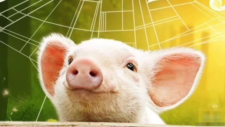 中国互联网大佬们为何偏偏爱上AI养猪?
