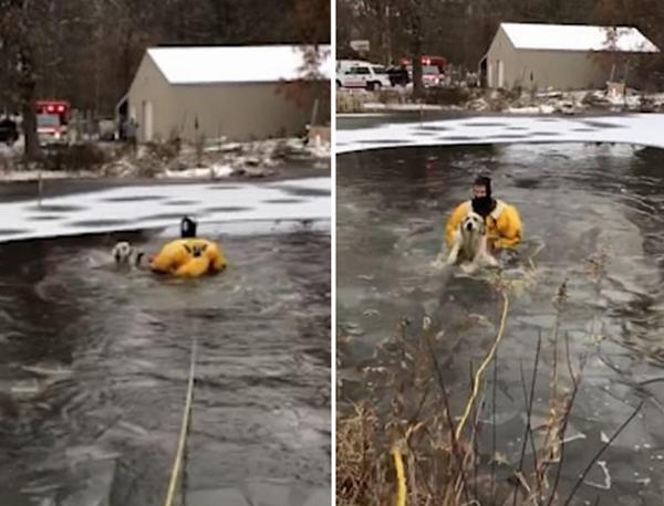 美消防员涉水破冰救落水小狗暖心之举获赞