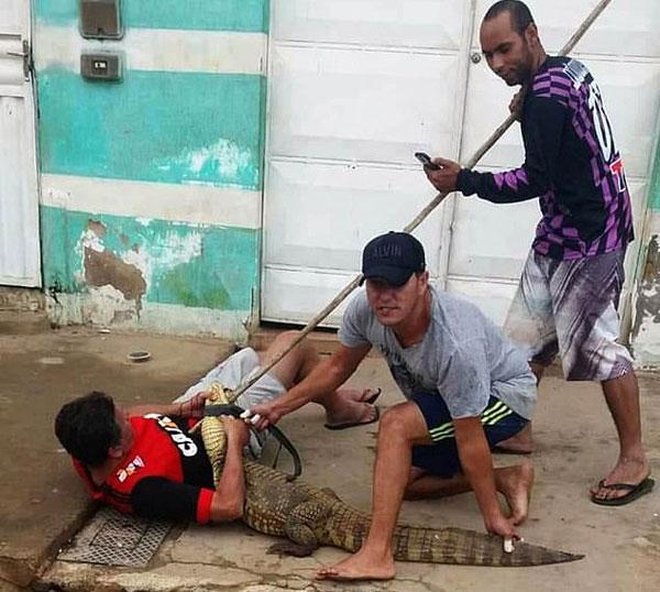巴西街头惊现短吻鳄 男子试图抓捕反被扑倒咬伤手