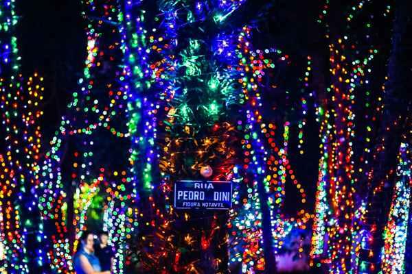 巴西:世界最大私人圣诞装饰空间 450万盏彩灯如童话森林