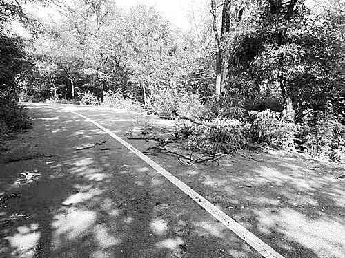 大树挡路引发事故致女子死亡 父母诉讼九年终获赔