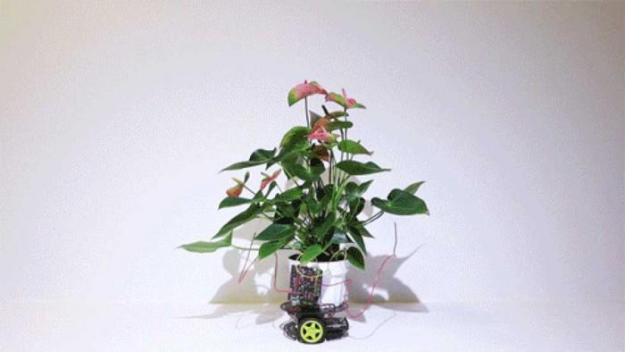 麻省理工学院创建植物和机器组成的控制论生命形态