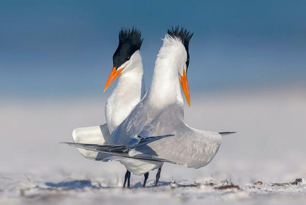 英举行科学摄影比赛 展示自然与科学之美