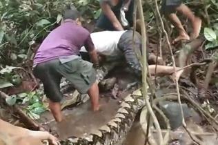 印尼巨蟒缠住渔民脚踝 众人合力将其制服
