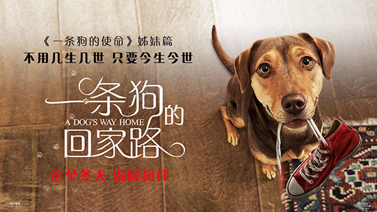 《一条狗的回家路》全新预告海报双发悬命冒险
