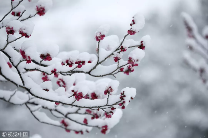 今日大雪,你那里下雪了吗?