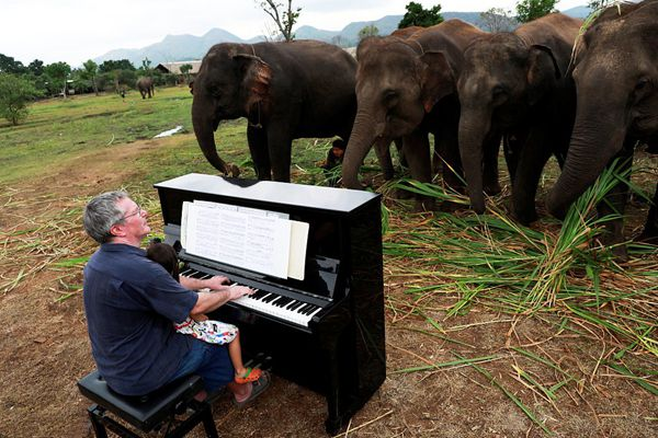 暖心!钢琴家为泰国退休大象弹奏音乐
