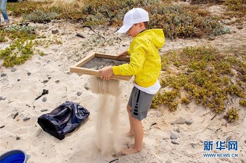 南非开普敦:清理海滩垃圾