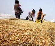 黑龙江个别大豆贸易商打白条