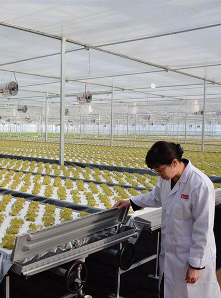 京东从日本三菱化学引进的植物工厂正式启用