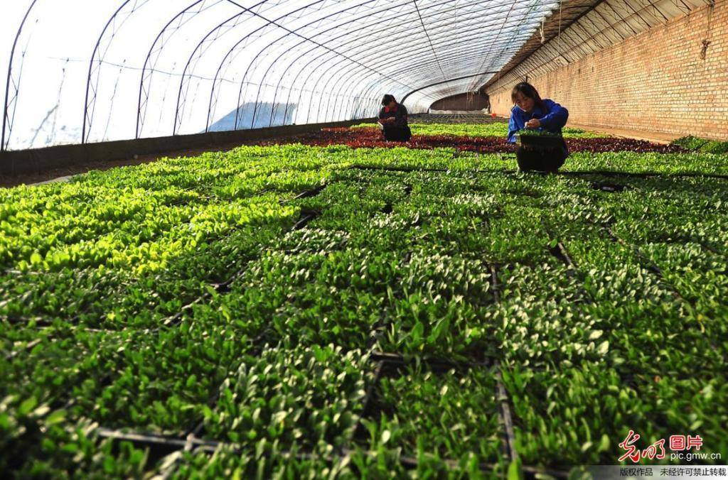 河北宣化:规模化种植 果蔬助脱贫