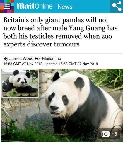 每年百万镑只为让熊猫生崽,结果却等来...英国人心态崩了!