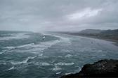 微视新西兰——鸟岛奇观