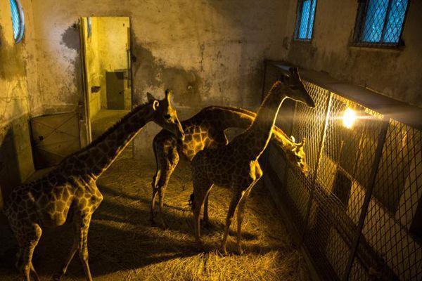 武汉动物园动物惬意过冬